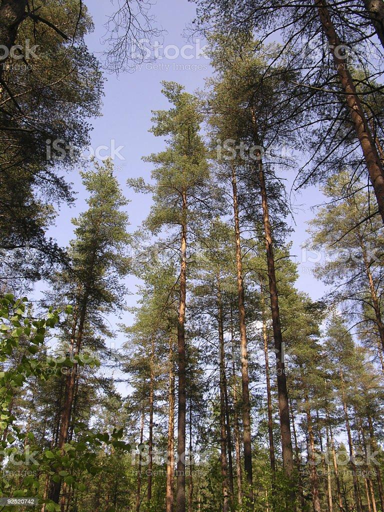 Timber reserve stock photo