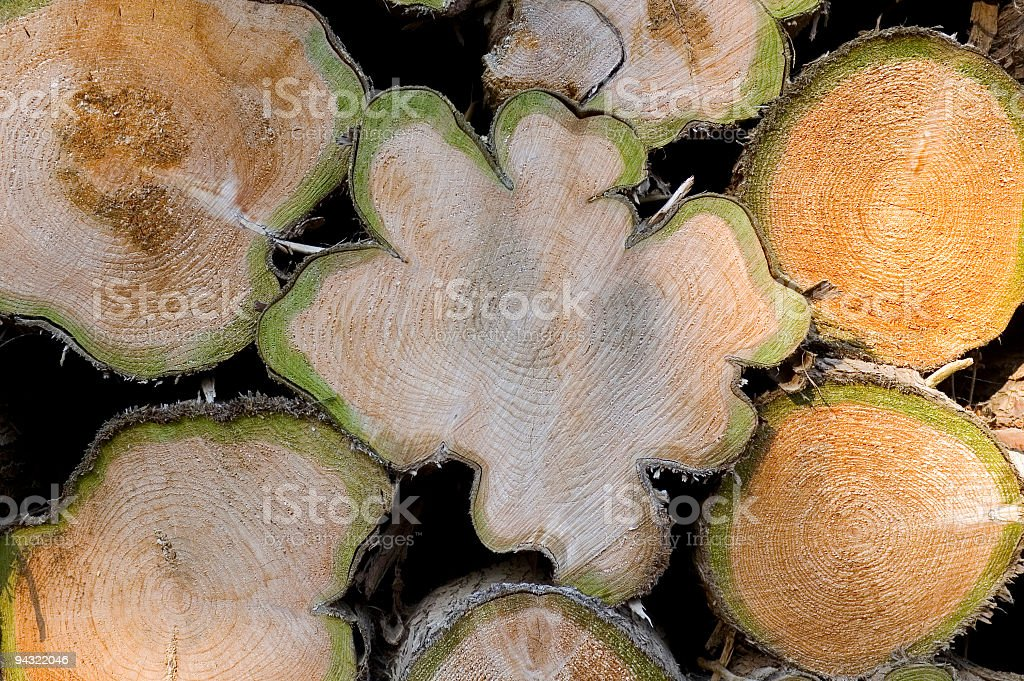 Timber rings royalty-free stock photo