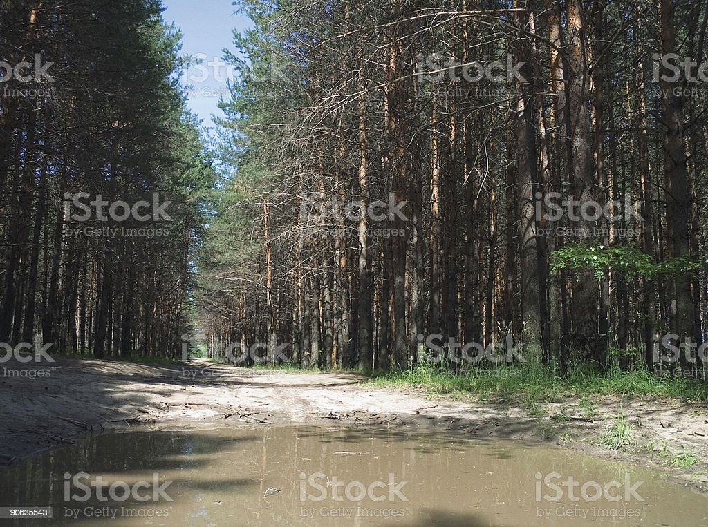 timber road royalty-free stock photo