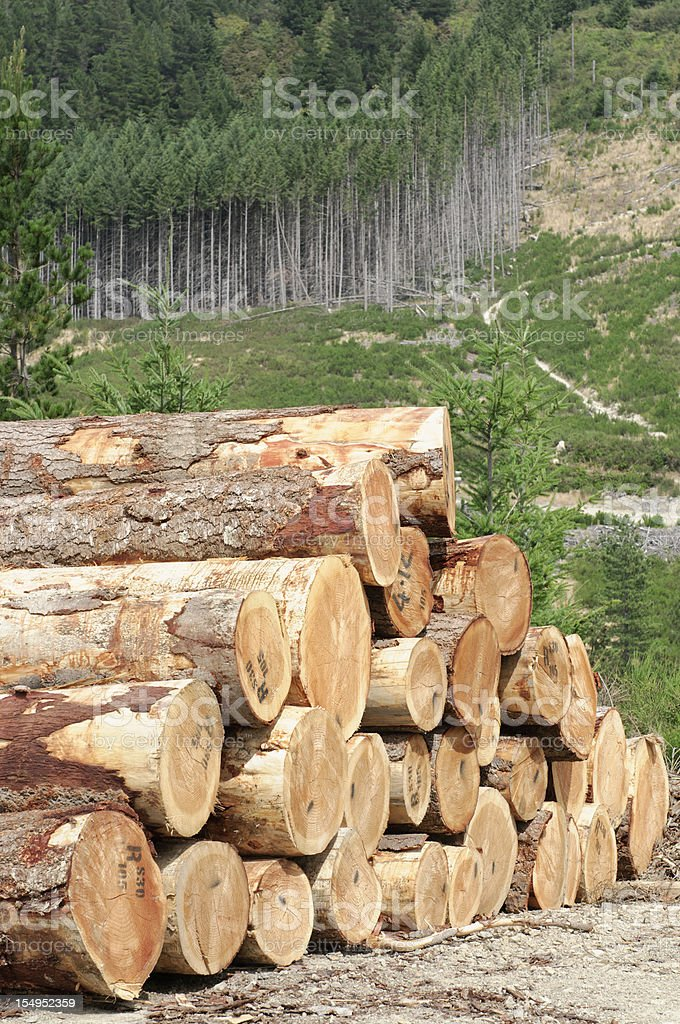 Timber Stack and Forest royalty-free stock photo