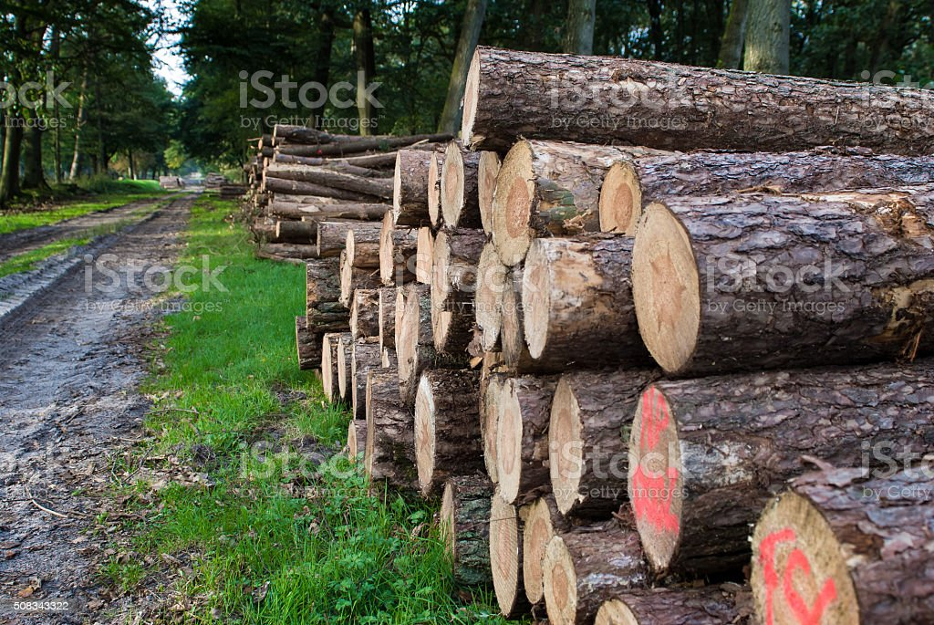 Timber Stacked logs in the forest stock photo