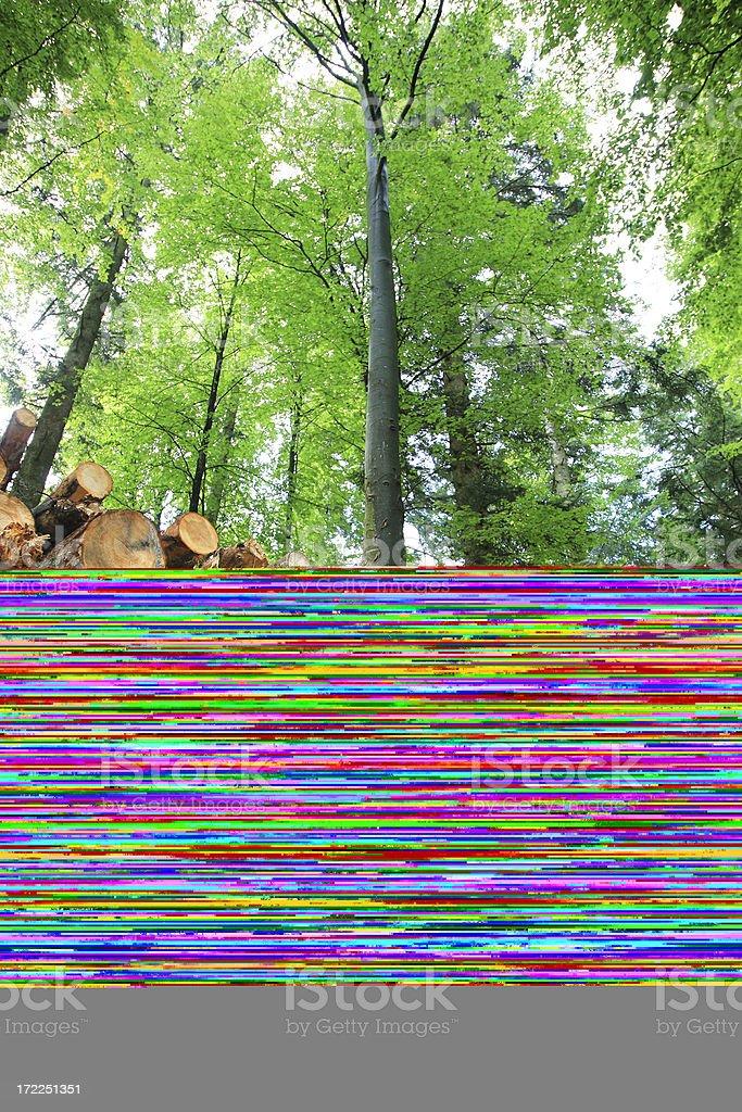 Timber stock royalty-free stock photo