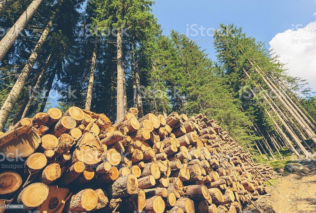 Timberland stock photo