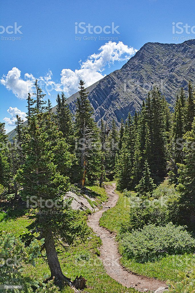 Timberline Trail stock photo