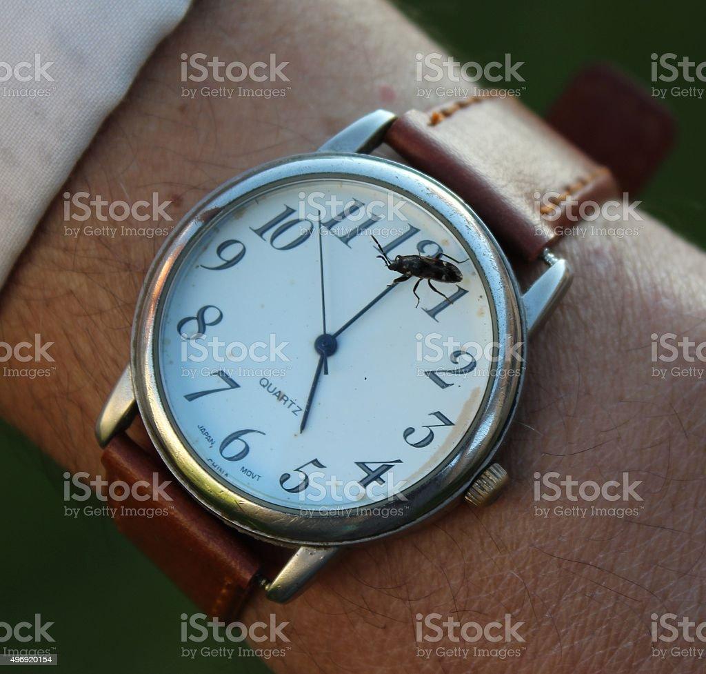 Time bug stock photo