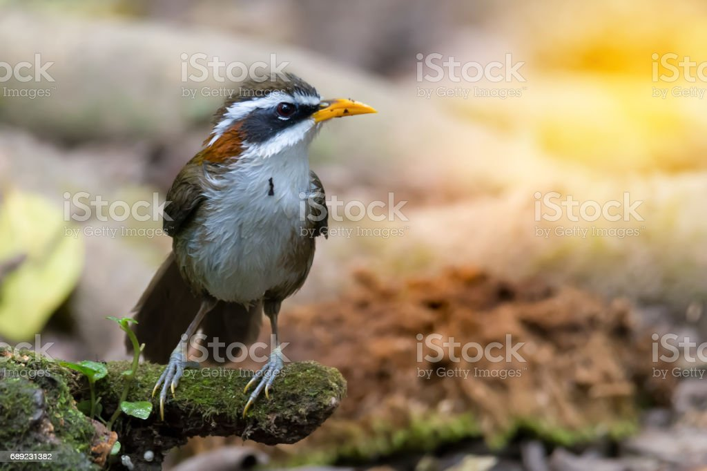Time for bathing,bird. stock photo