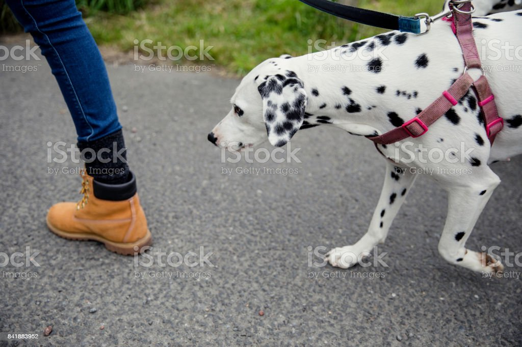 Time to Take the Dog for a Walk stock photo