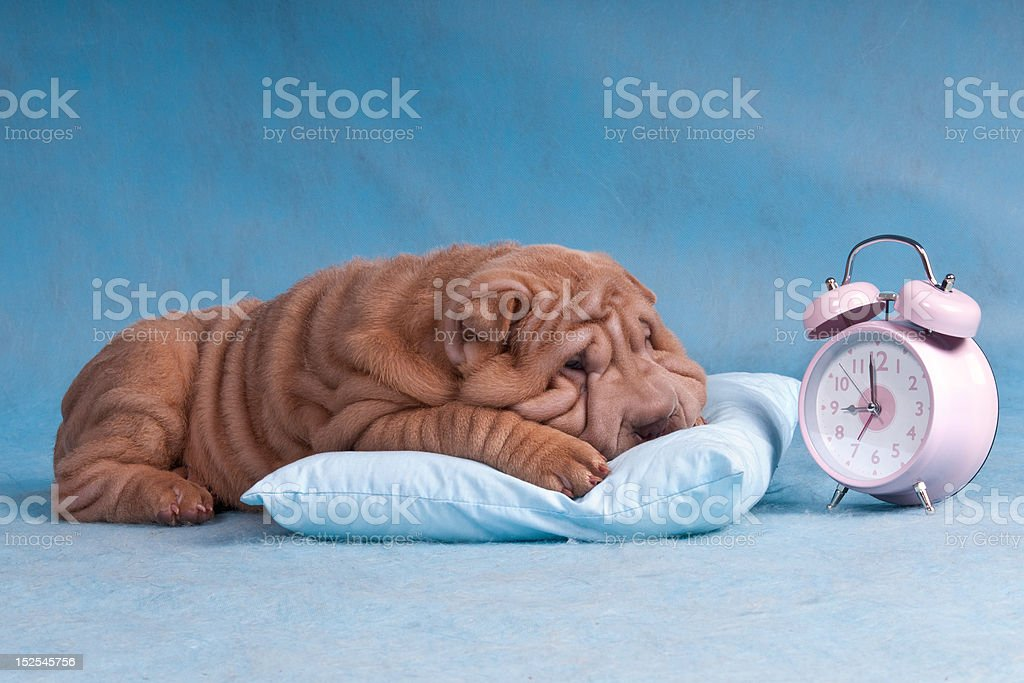 Time to Wake-Up stock photo
