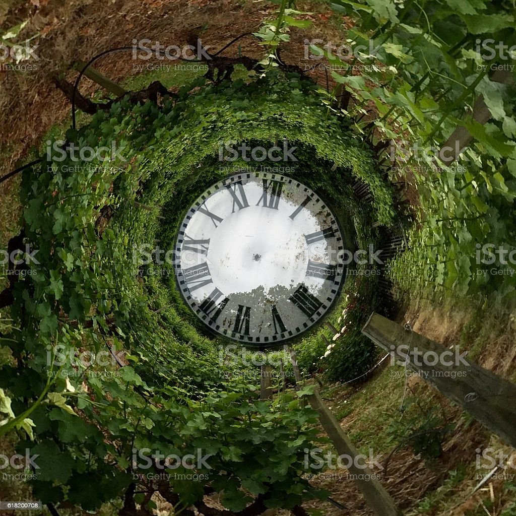 Time/vineyard stock photo