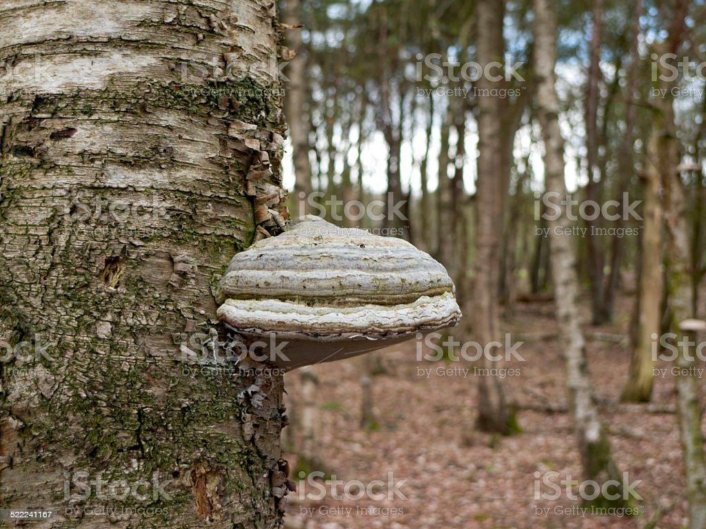 Tinder Bracket stock photo