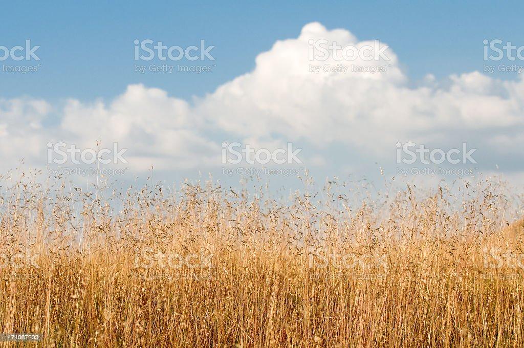 tinder dry! royalty-free stock photo