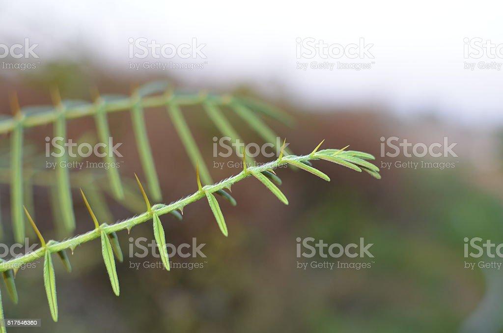 tine branch on blur background stock photo