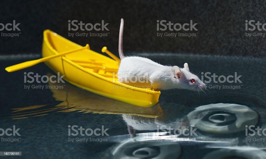 Tiny adventurer Mouse Canoeing Vast Hot Tub Wilderness royalty-free stock photo