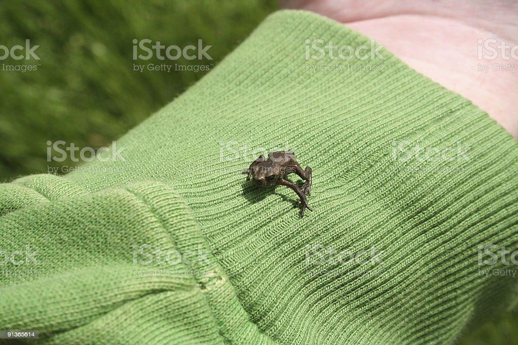Tiny baby toad royalty-free stock photo