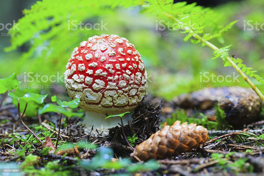 Tiny but Magical Places in a Forest stock photo