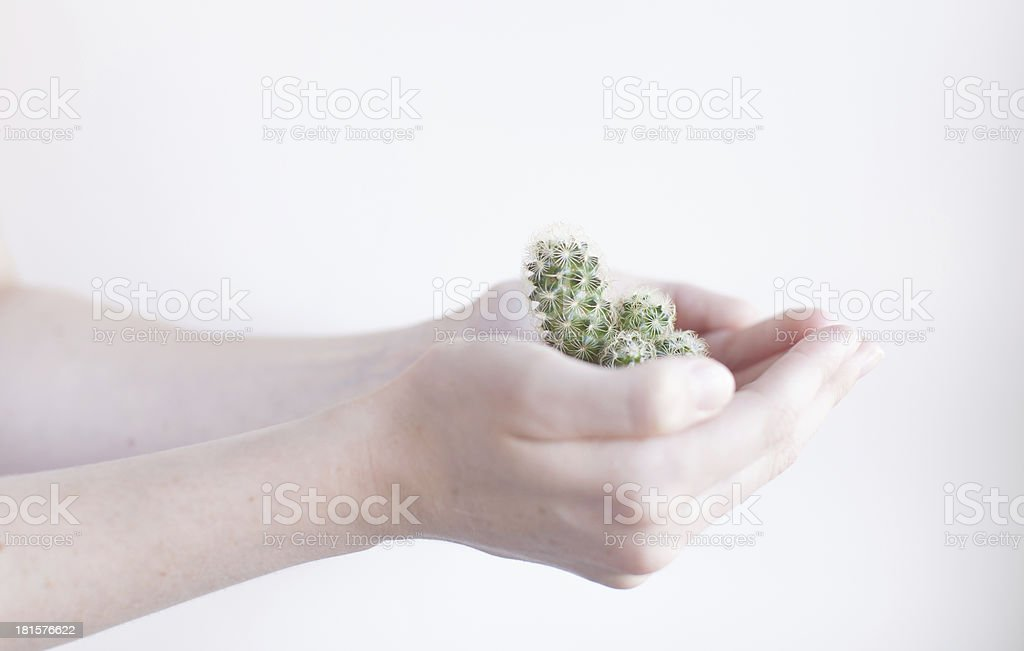 Tiny cacti held by pure young hands stock photo