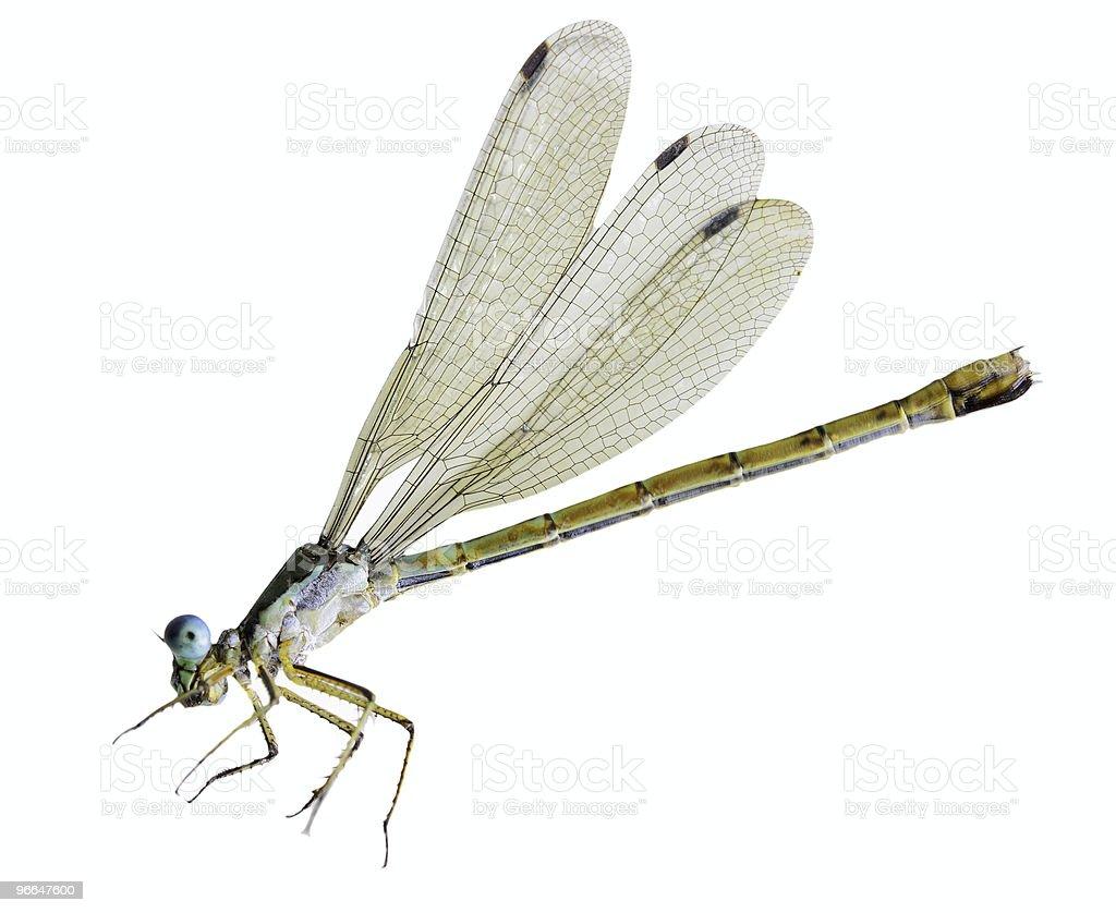 Tiny Dragonfly stock photo