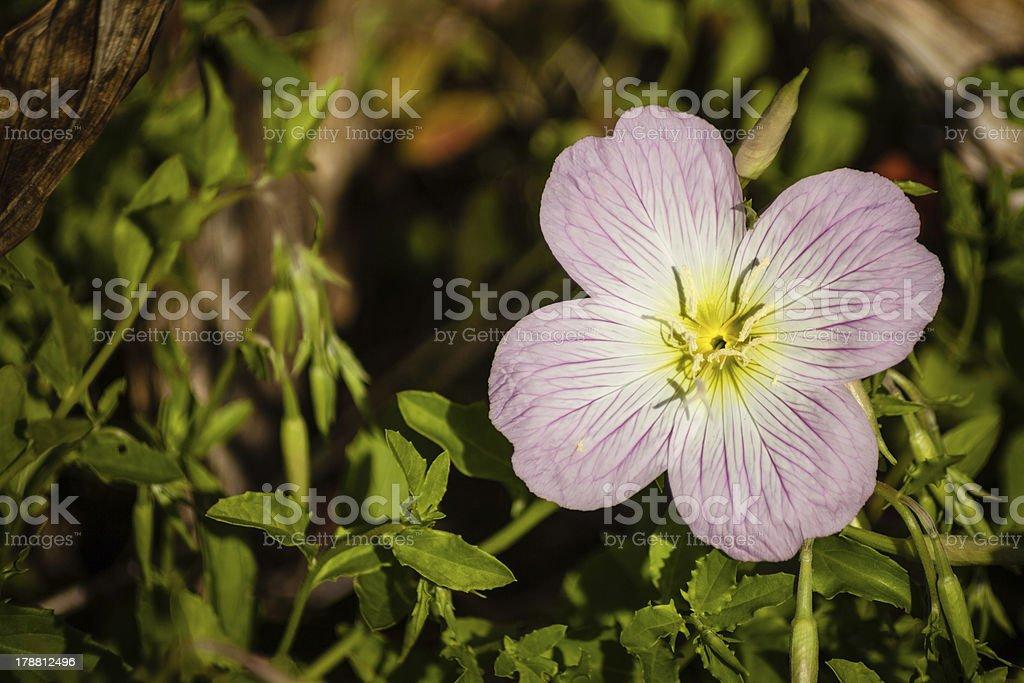 Tiny flower royalty-free stock photo