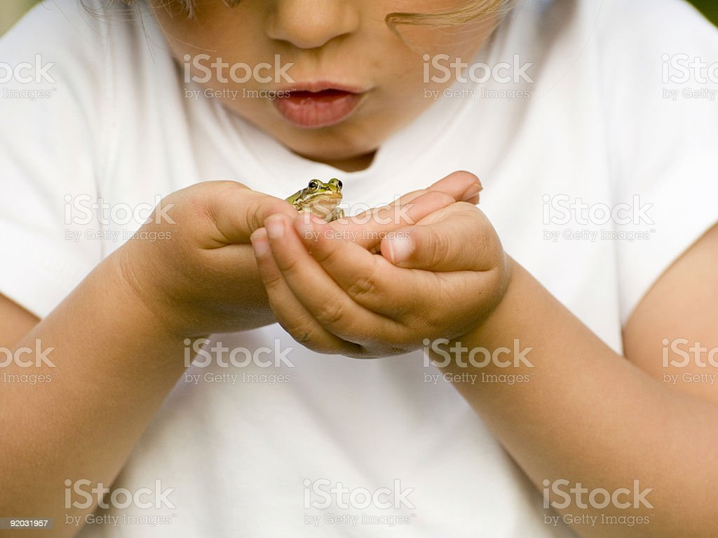 Tiny frog on hands stock photo