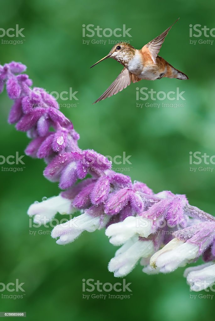 Tiny Hummingbird in the Garden Vertical Image stock photo