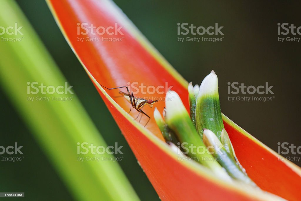 Tiny insect green concept royalty-free stock photo