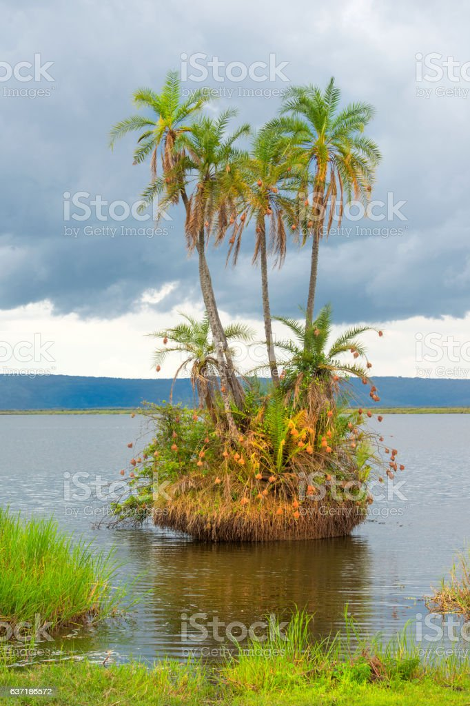 Tiny island with palm trees in an African lake stock photo