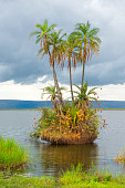 Tiny island with palm trees in an African lake