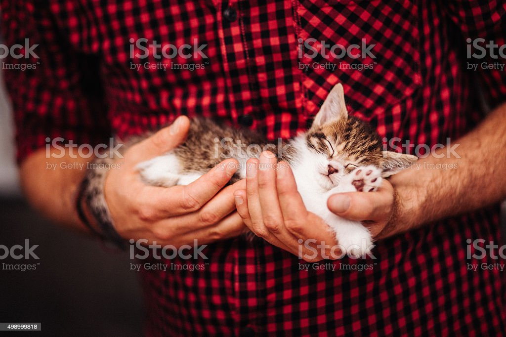 Tiny kitten sleeping safely a man's large hands stock photo