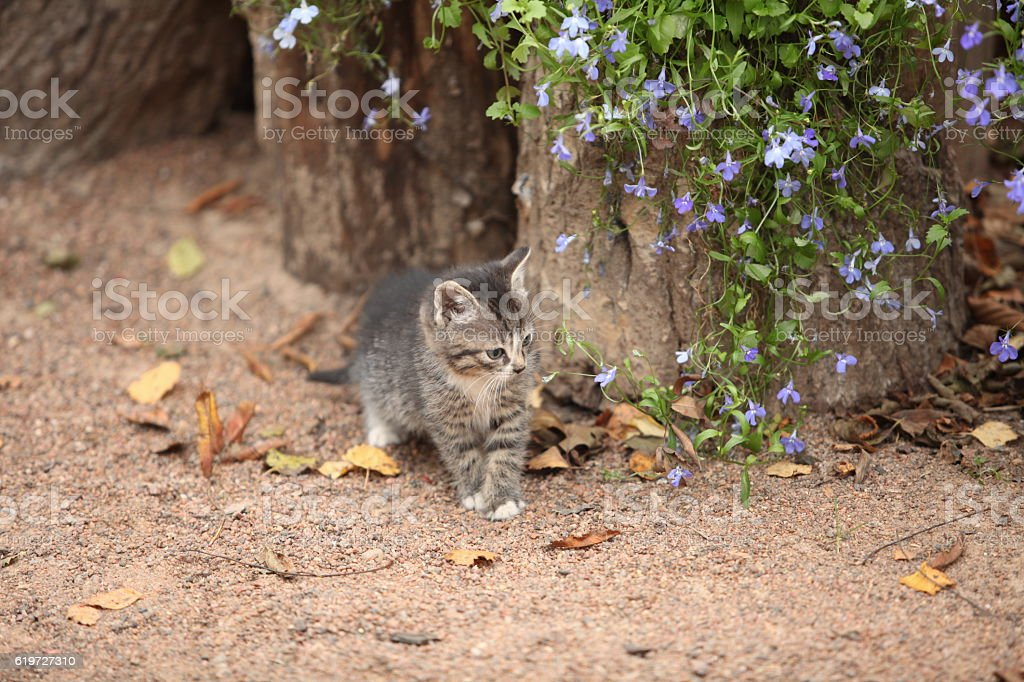 tiny kitten with flowers stock photo
