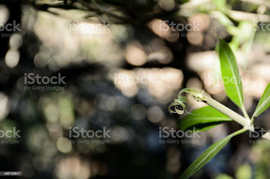 Tiny Leaf stock photo