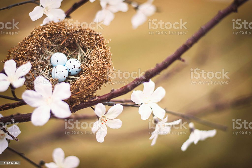Tiny nest in tree branches with blossoms stock photo