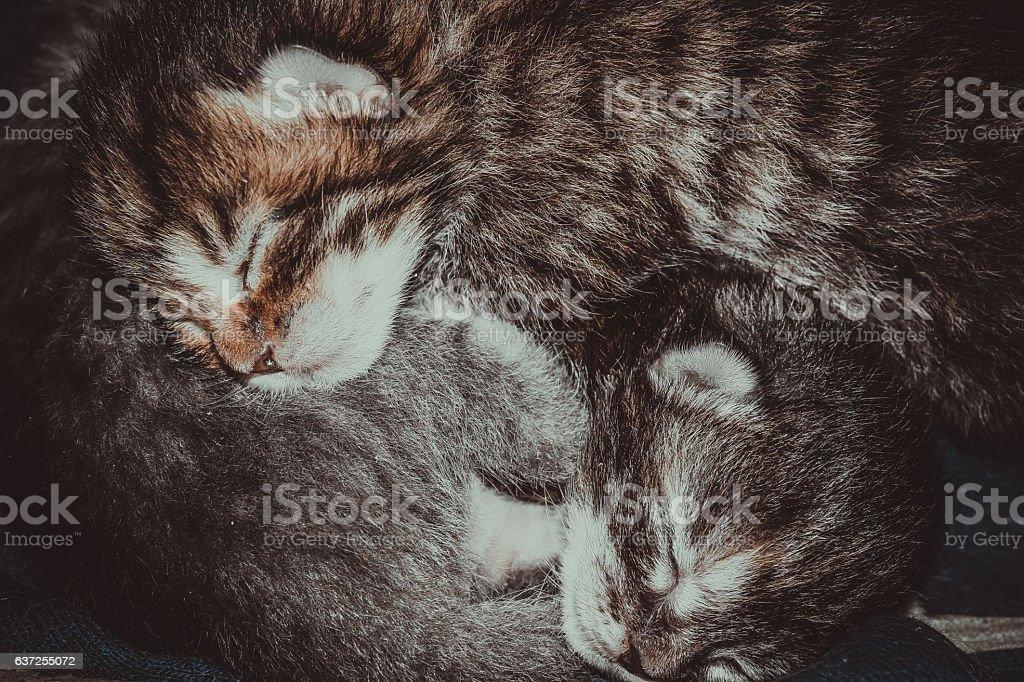 Tiny newborn kittens stock photo