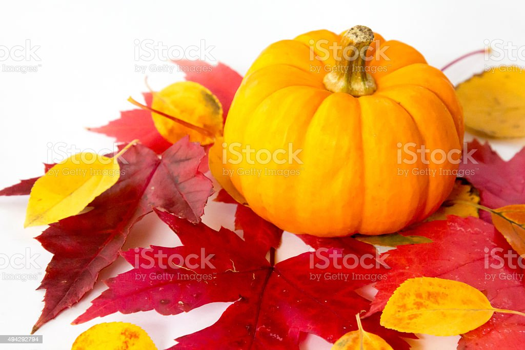 Tiny pumpkin sitting on colorful autumn leaves stock photo
