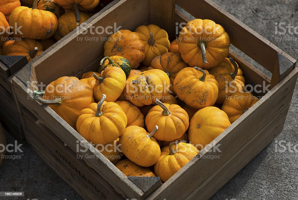 Tiny pumpkins in a wooden crate stock photo