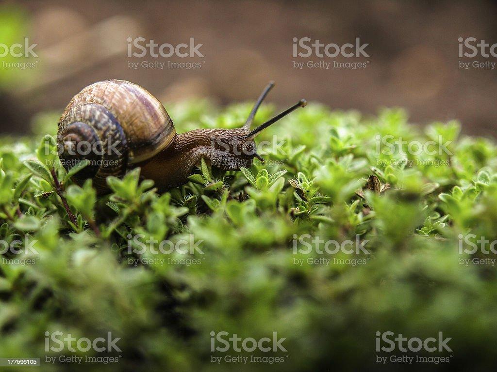 Tiny snail stock photo