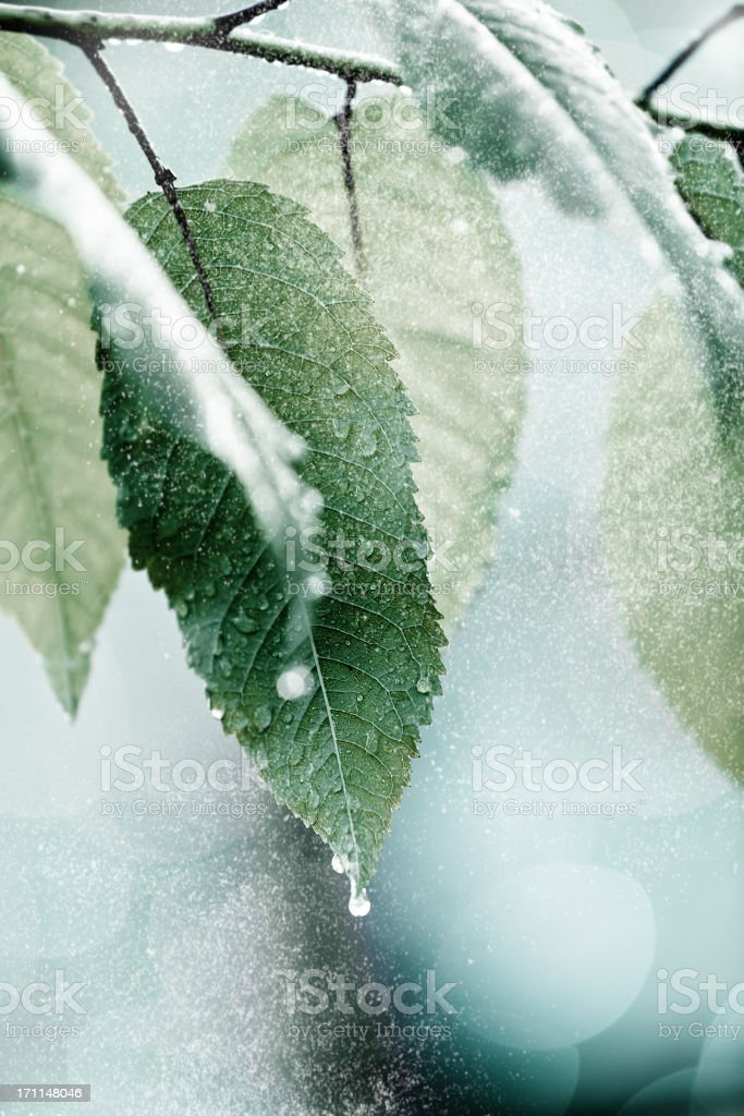 Tiny snow falling on a frozen leafs stock photo