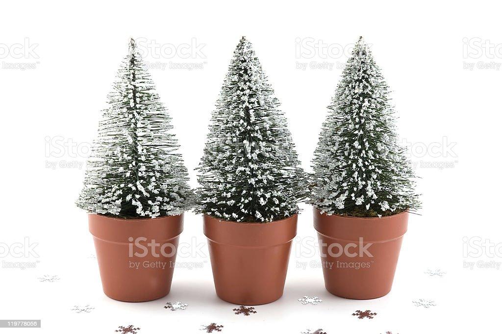 Tiny snow-flecked trees royalty-free stock photo