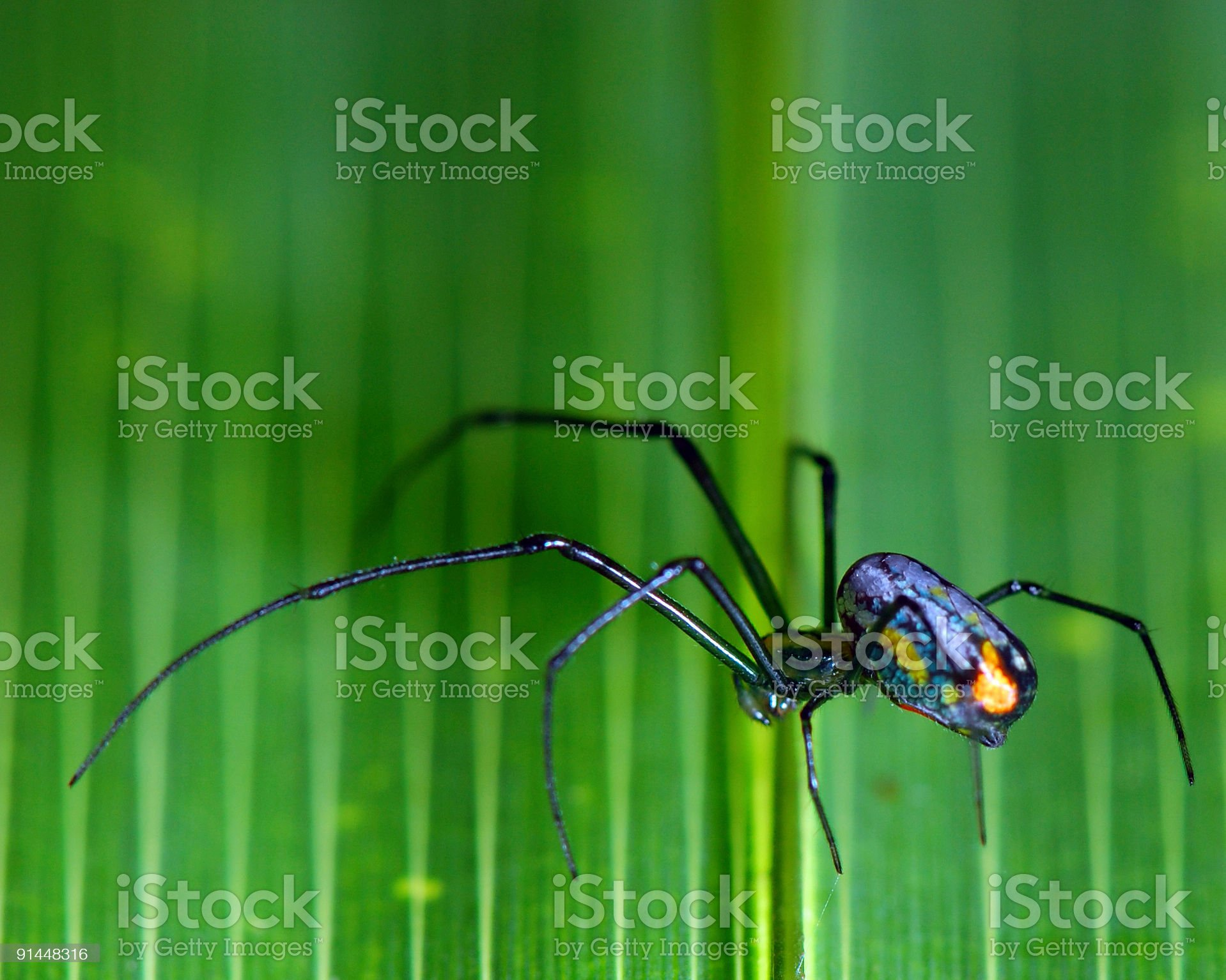 Tiny Spider on Green and Yellow royalty-free stock photo