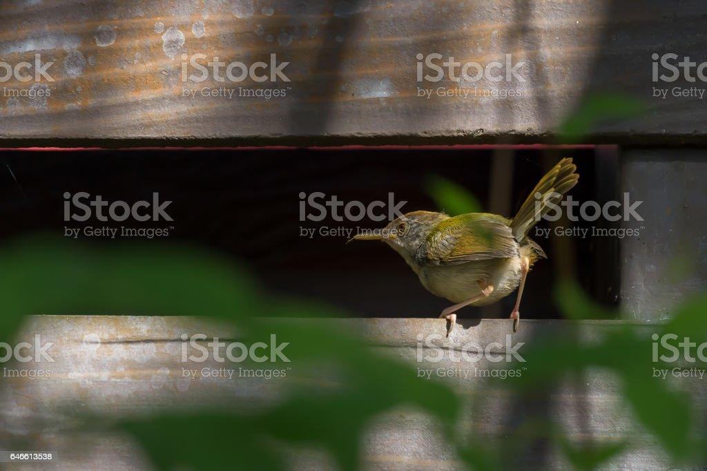 Tiny tiny cute bird.