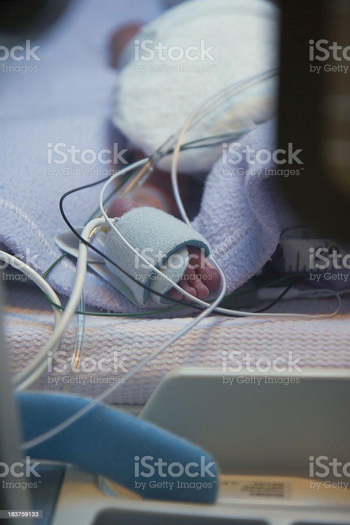 Tiny Toes stock photo