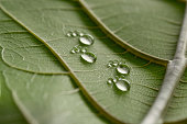 tiny water drop footprints on leaf