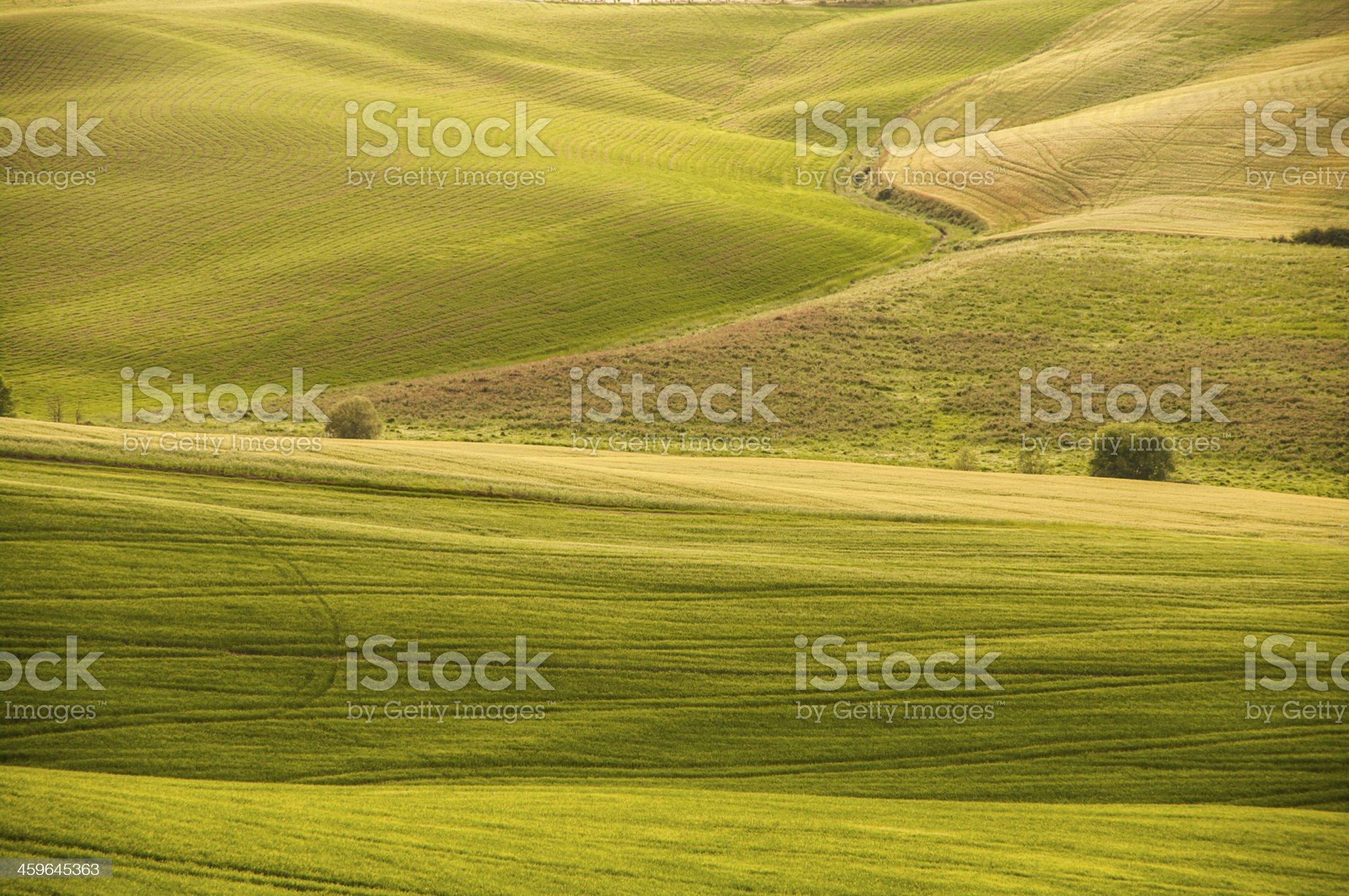 tipico paesaggio rurale toscano di collina royalty-free stock photo