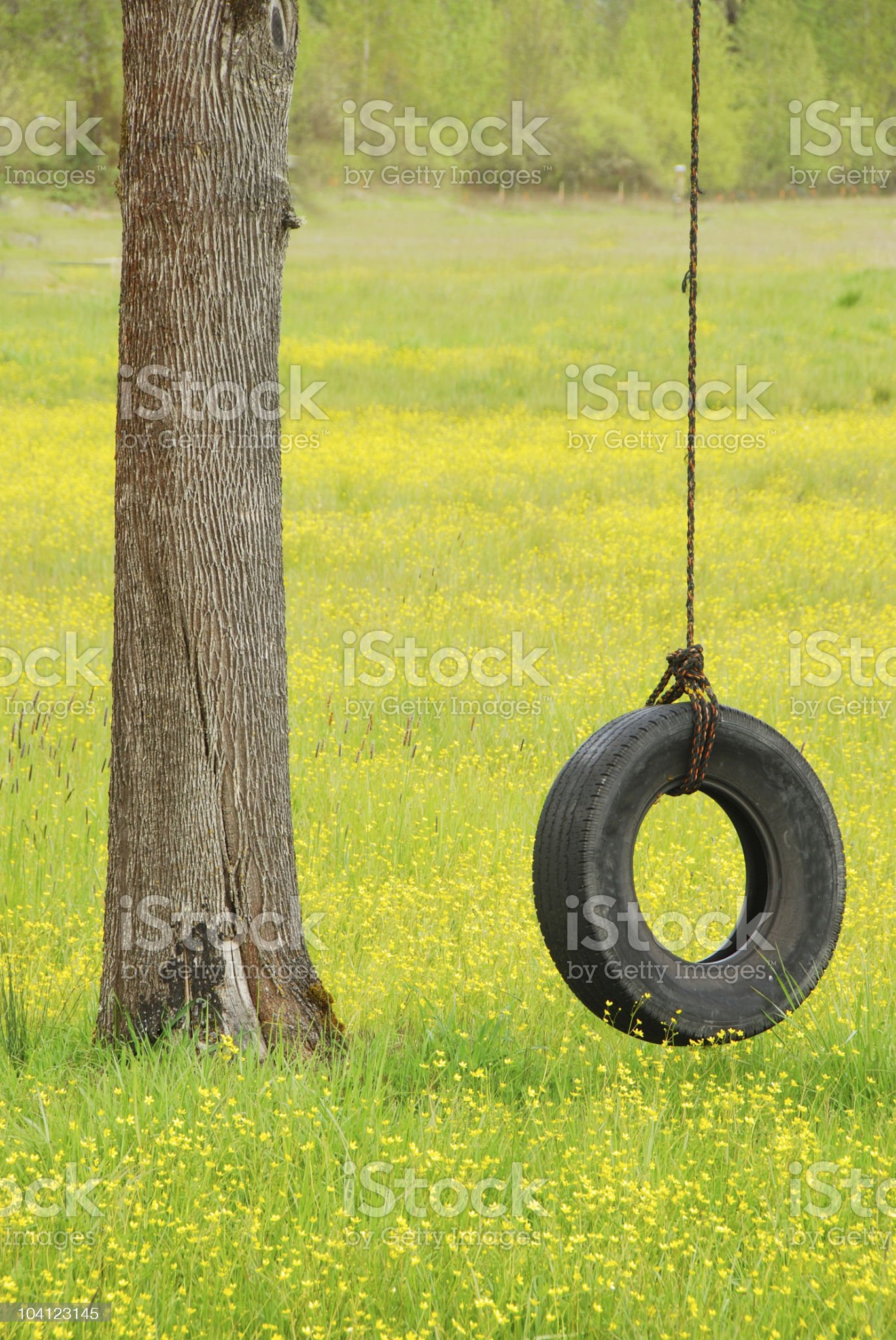 Tire Swing in Yellow royalty-free stock photo