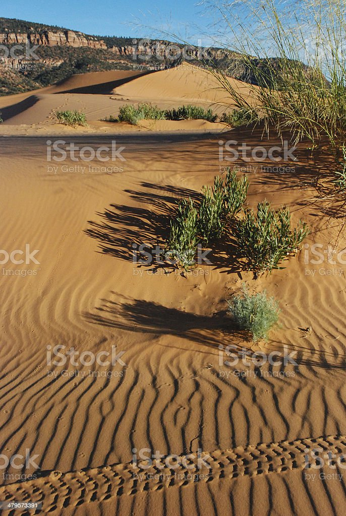 Tire Tracks Coral Pink Sand Dunes State Park Utah stock photo