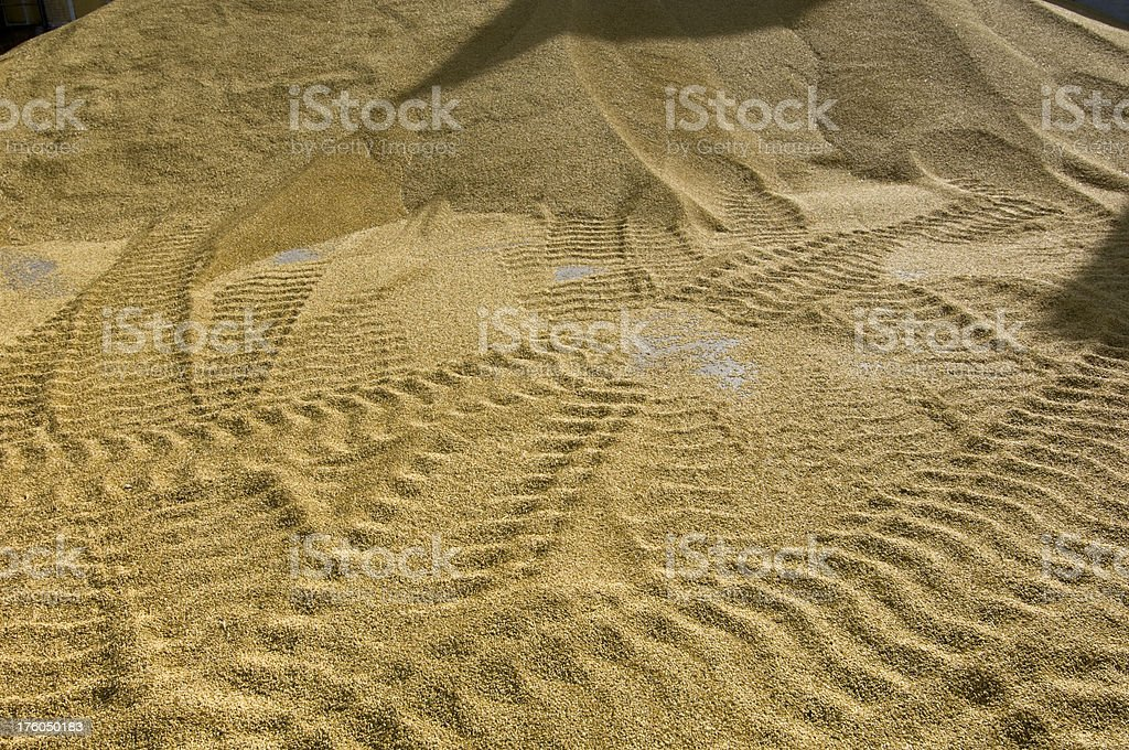 Tire Tracks in a Pile of Harvested Grain. stock photo