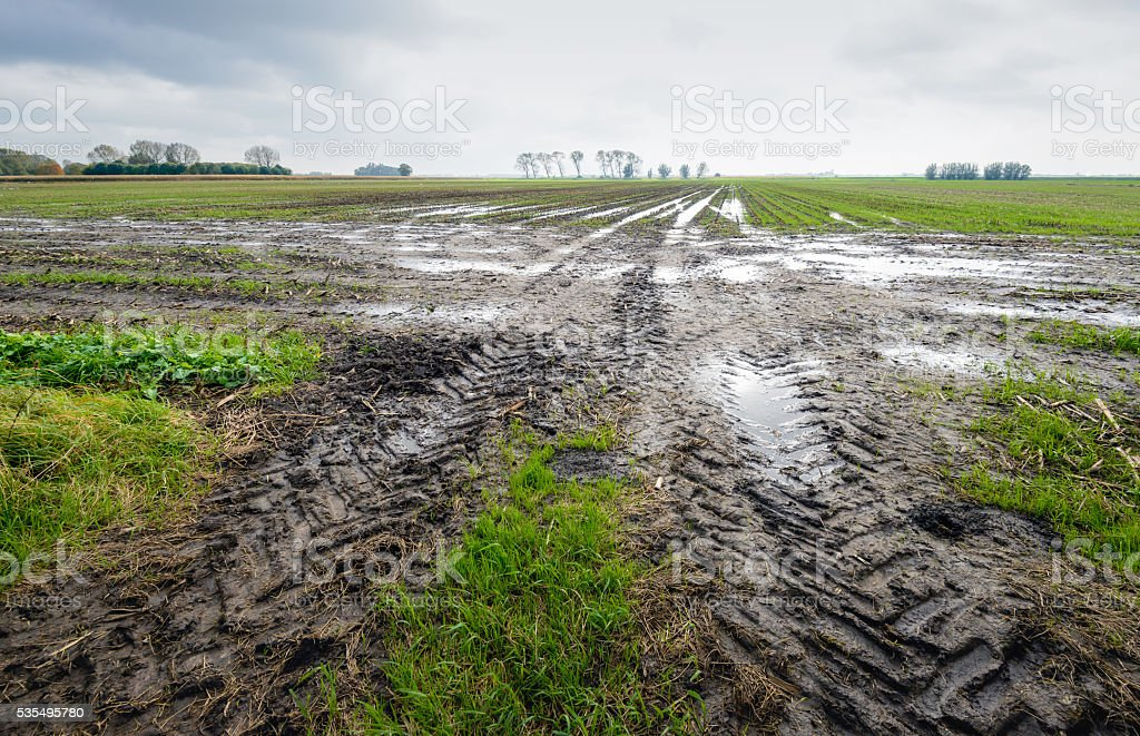 Tire tracks in a wet field stock photo