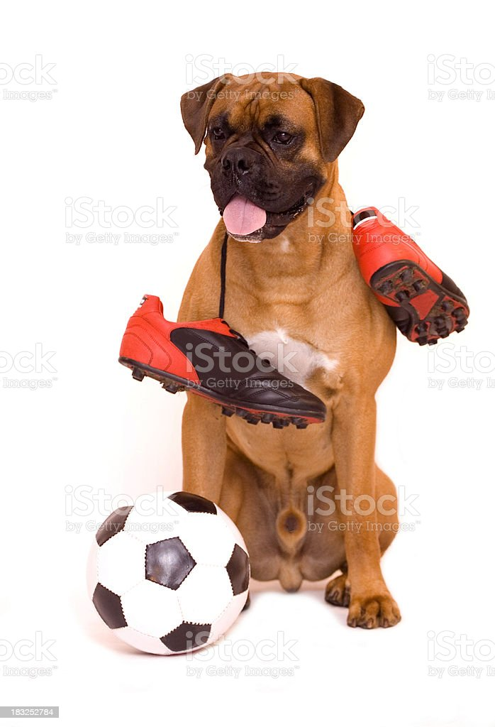 Tired after match royalty-free stock photo