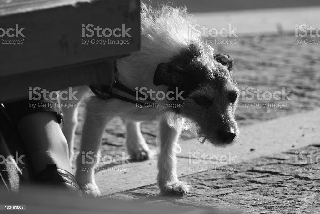 タイアード犬 ロイヤリティフリーストックフォト