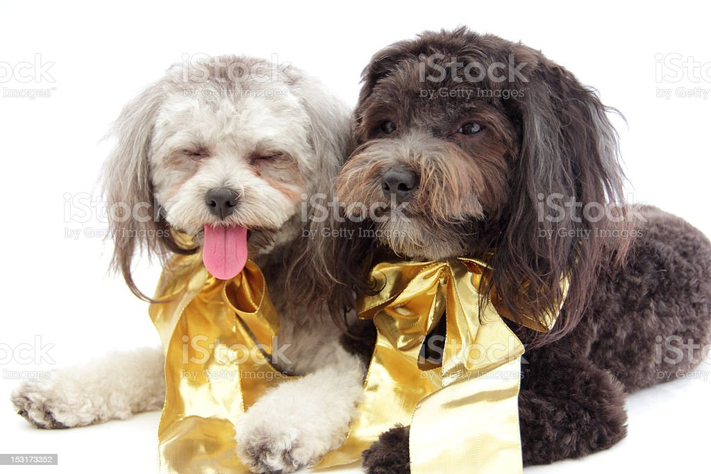 tired dogs stock photo