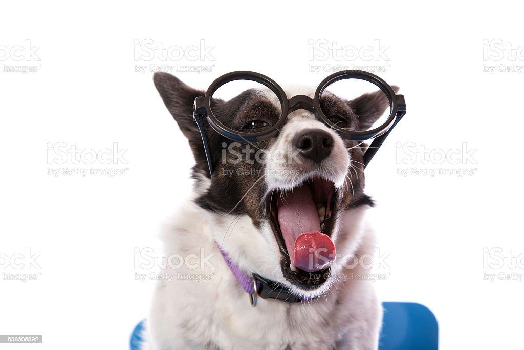 Tired Education Dog stock photo